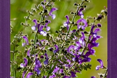 Frühlingsblumen-9969 Kopie