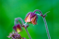 sad flower 01